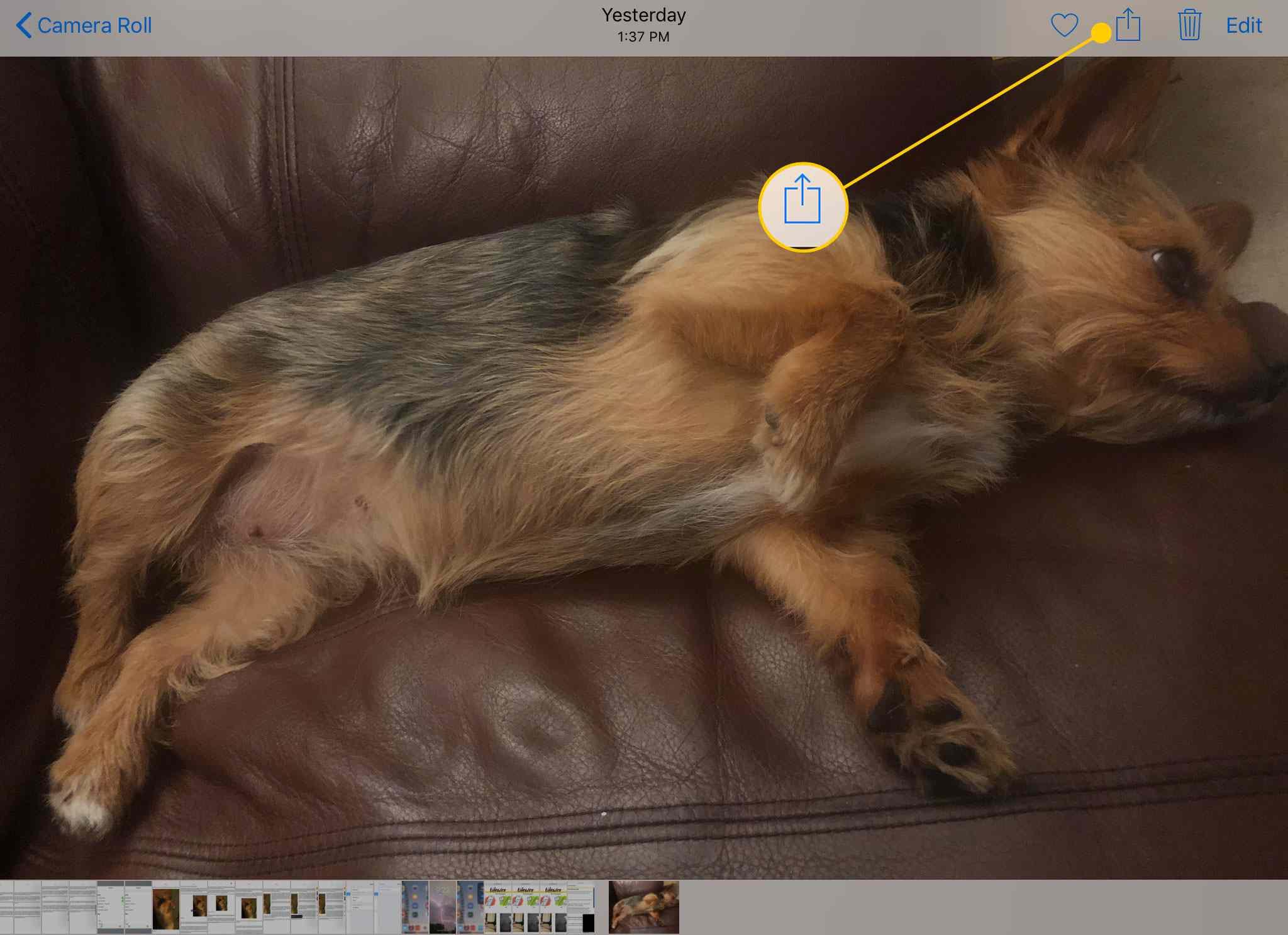 Фото на iPad с выделенной кнопкой «Поделиться»