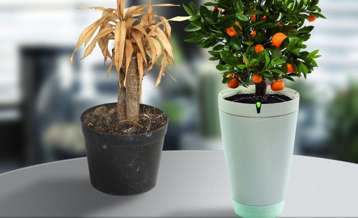 Никогда не убивай растение снова: 7 гаджетов, чтобы сделать тебя профессионалом в садоводстве